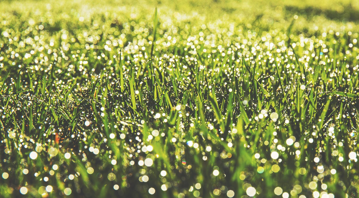 Home Tips –  How do they get their lawn so nice?