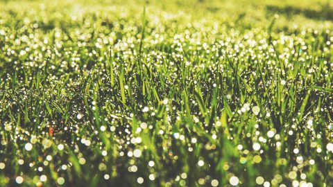 Home Tips How Do They Get Their Lawn So Nice Design Homes